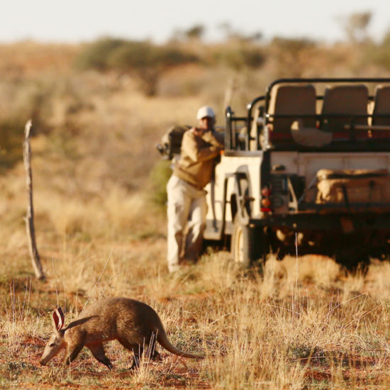 Aardvark at Tswalu with Vehicle