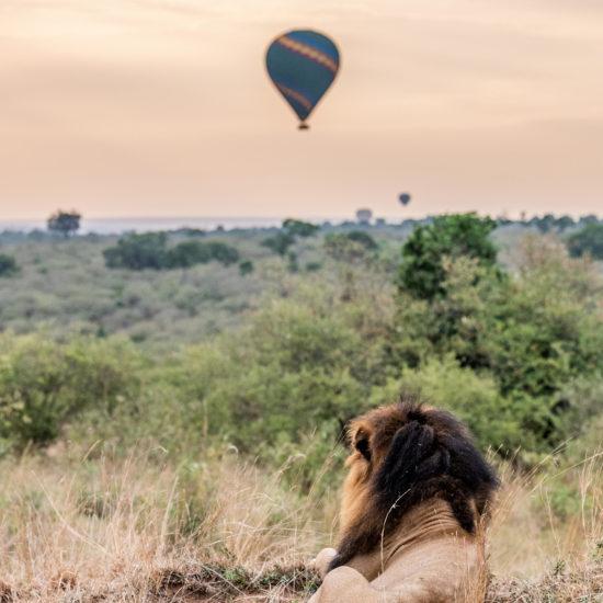 Ballon & Lion