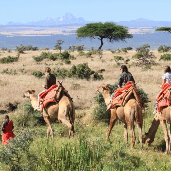 Camel safari in Laikipia