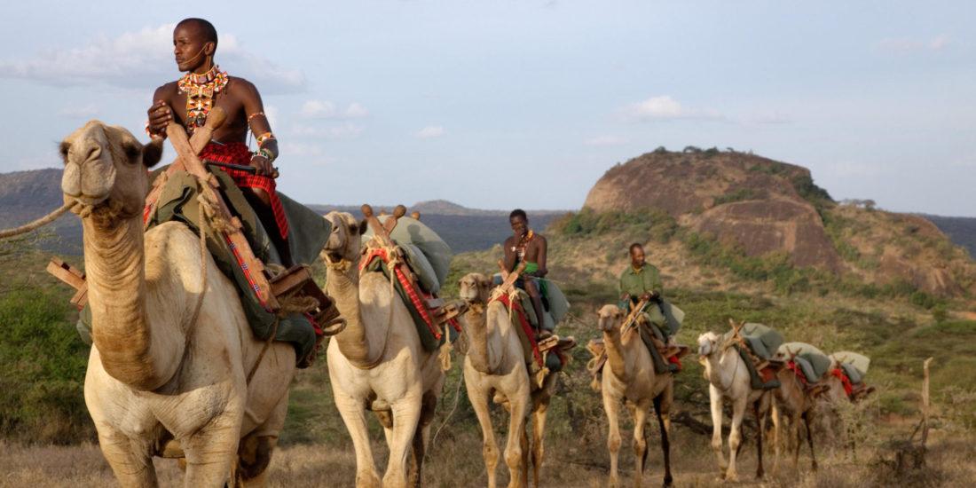Camel back safari