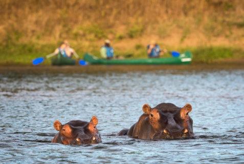 Canoe with Hippos