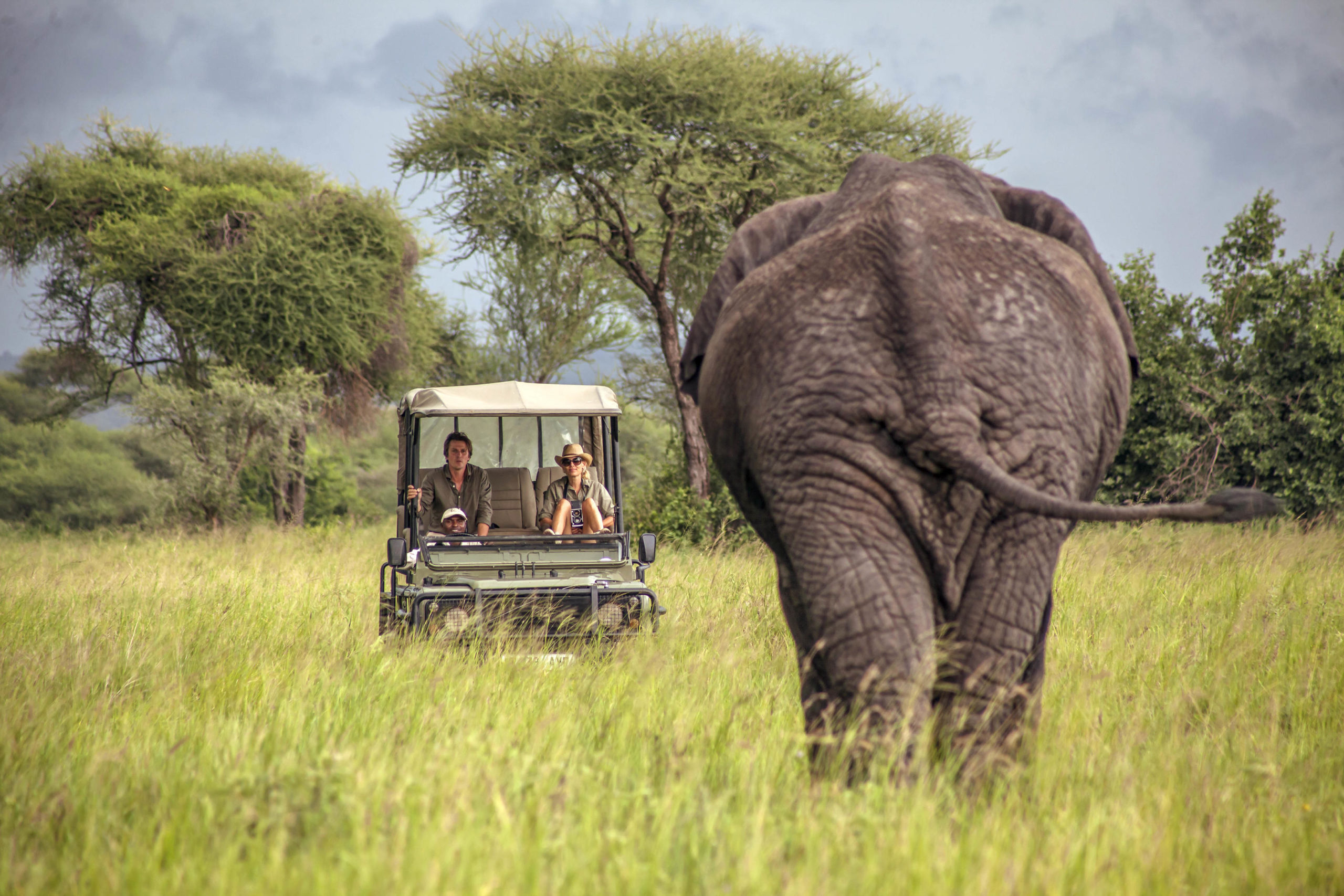 Elephant and Vehicle at Chem Chem