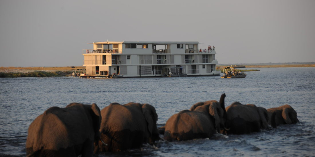 Elephants in front of Cruise Boat