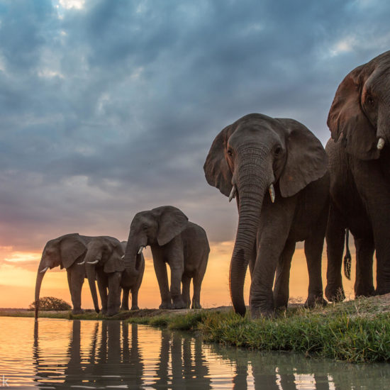 Elephants at sunset-Jabulani