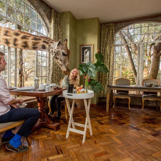 Giraffe breakfast