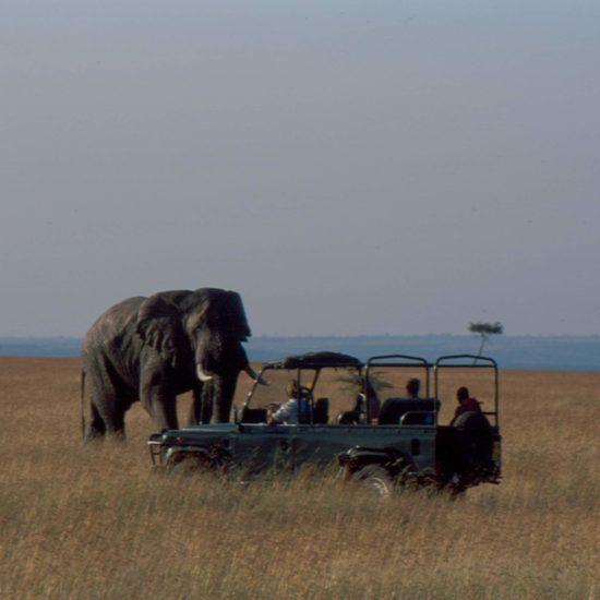 Elephants & Vehicle