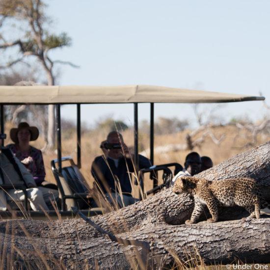 Leopartd Cub on Safari