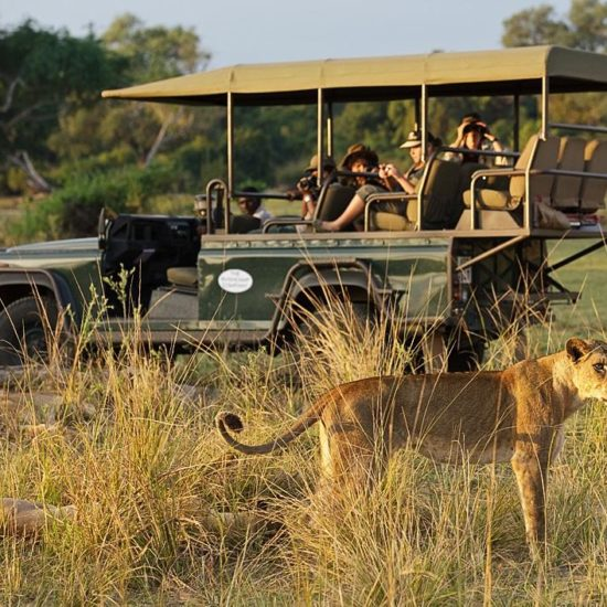 Lioness with vehicle