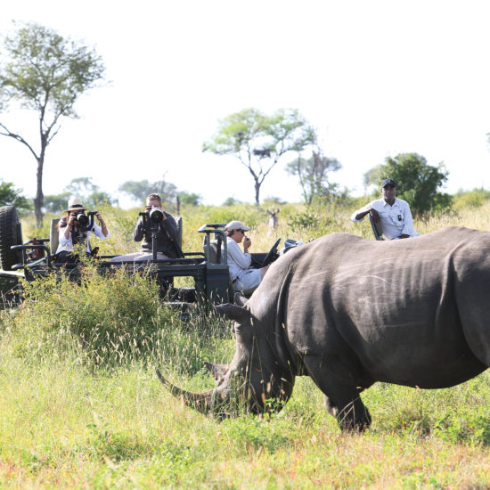 Rhino and vehicle