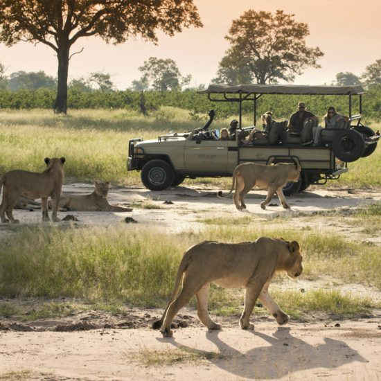 Lion from Jeep