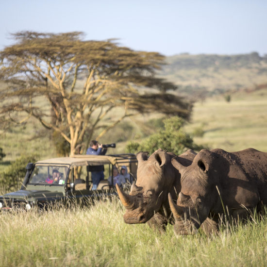Vehicle with rhinos