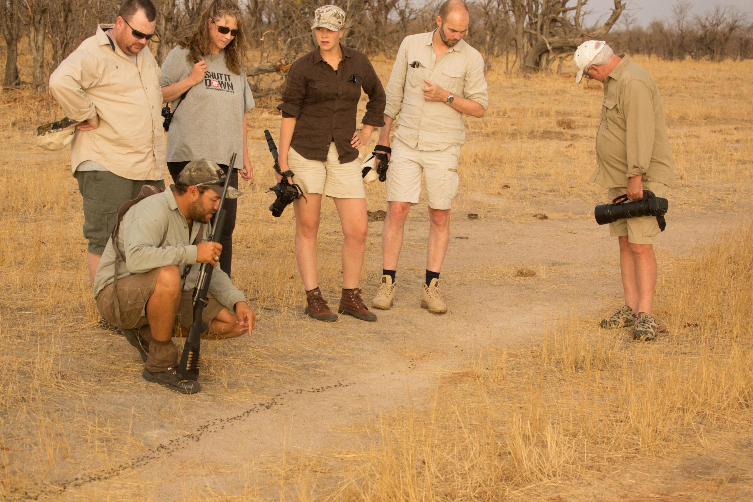 Walking safari with guide