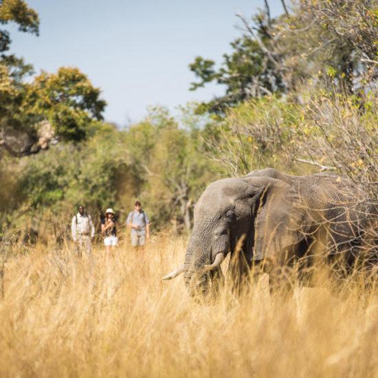 Walking Safari with Elephant