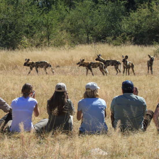 Walking Safari with Wild dogs