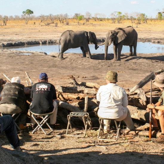 Water hole watching elephants