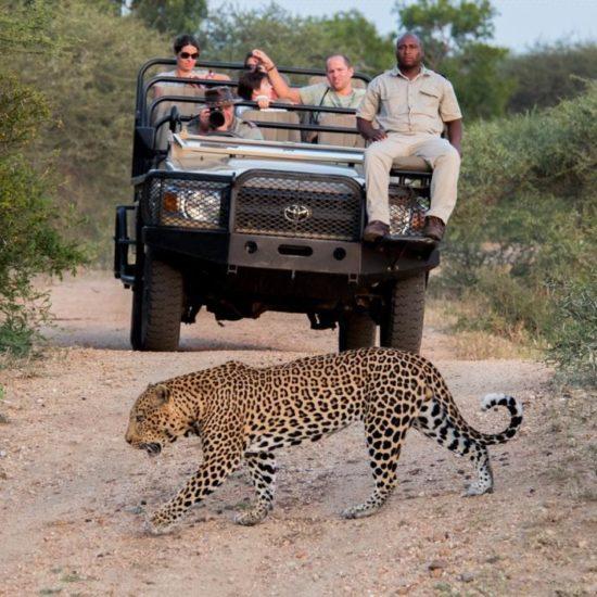 Leopard on Gamedrive