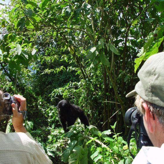 Gorilla Viewing