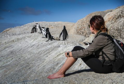 penguins with lady sitting
