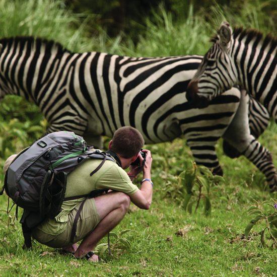 walking safari with zebra