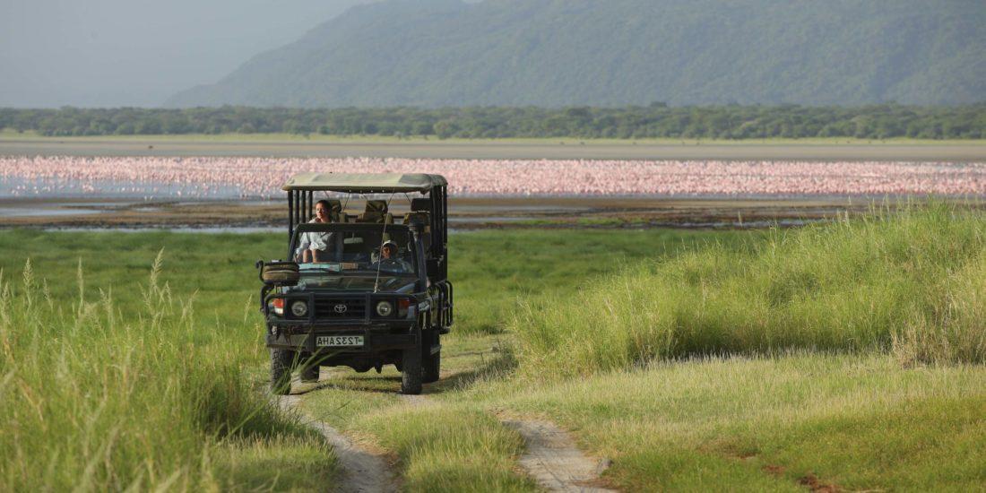 Flamingos on Lake Manyara with vehicle